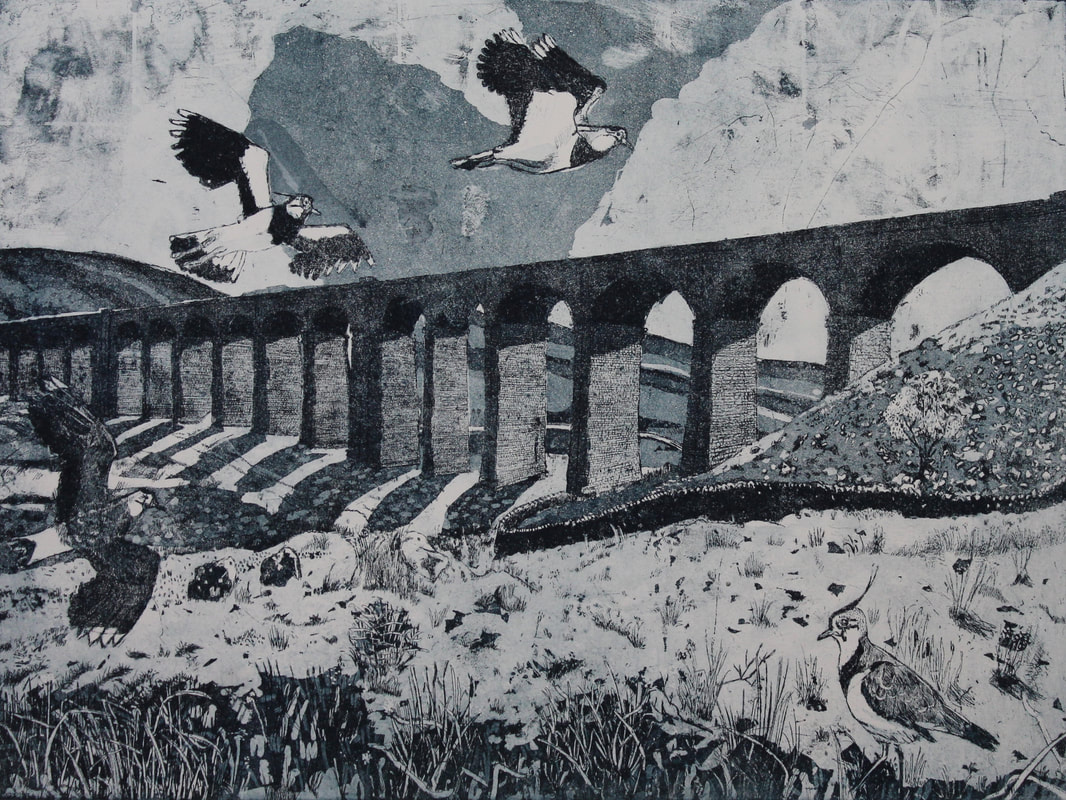 Janis Goodman - lapwings over ribblehead